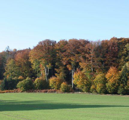Generationenprojekt Wald