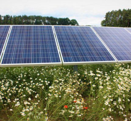 Ergebnisse der 2. Sonderausschreibung für Photovoltaikanlagen
