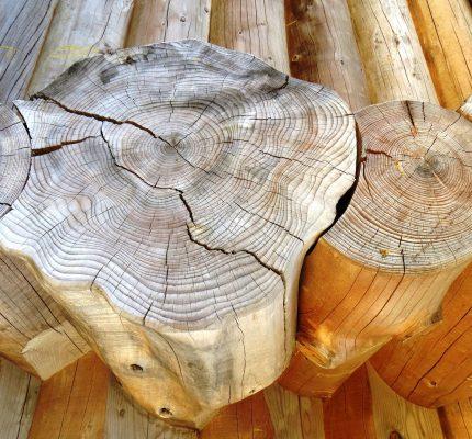 Wohin mit dem Kohlenstoff? Webkonferenzen beleuchten Wald, Holz und Moore als Werkzeuge gegen die Klimakrise