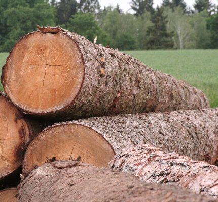 Aus rund wird eckig – so entsteht ein Holzhaus