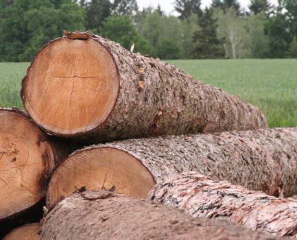 Bayerns Käferholz – Ein wertvoller Rohstoff