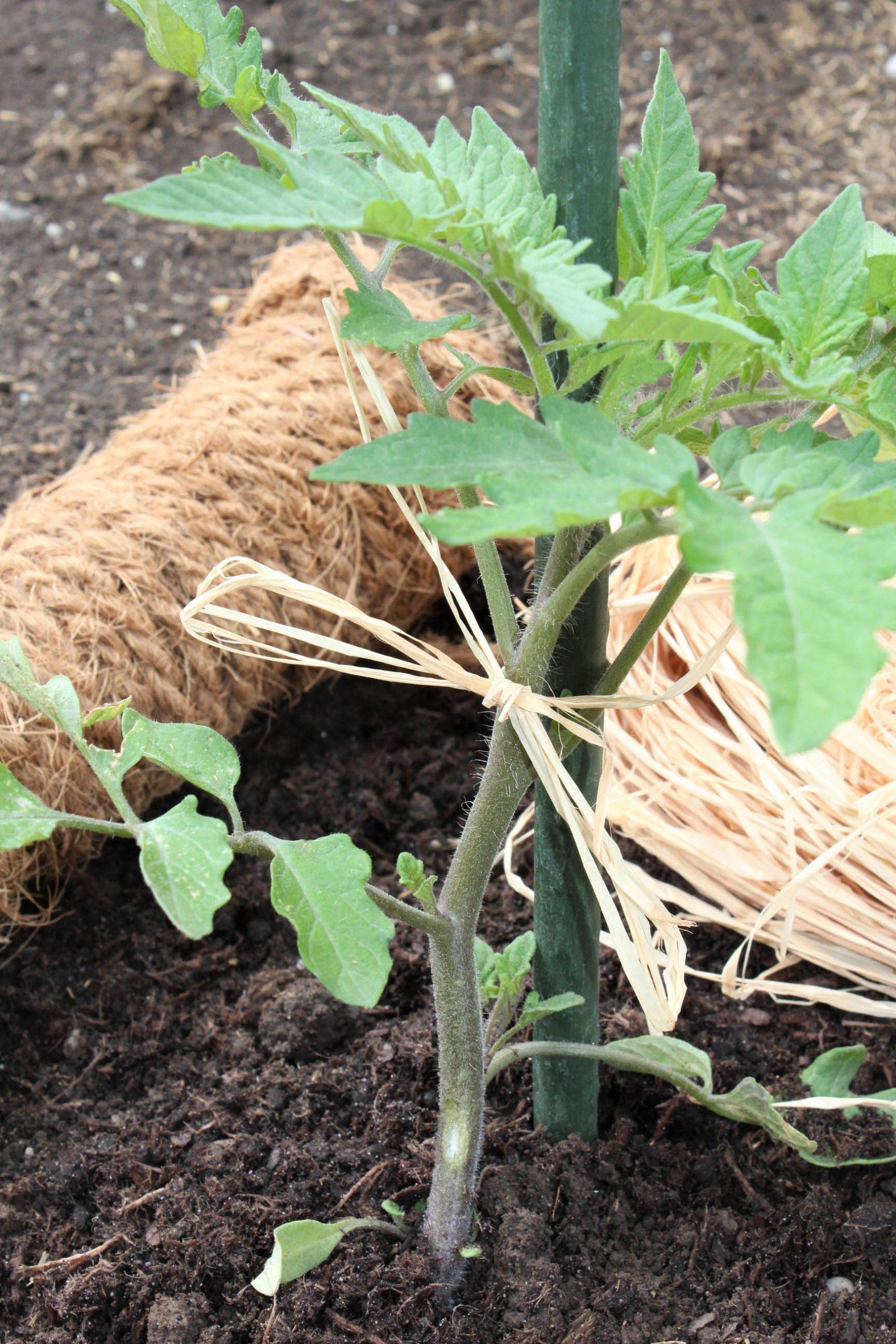 Nachhaltige Pflanzenanzucht