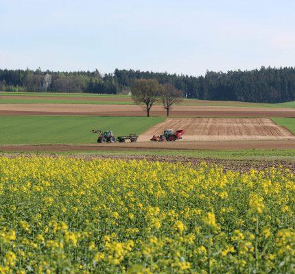 Nachwachsende Rohstoffe als Alternative