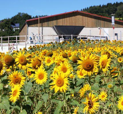 Biogas im Ökologischen Landbau