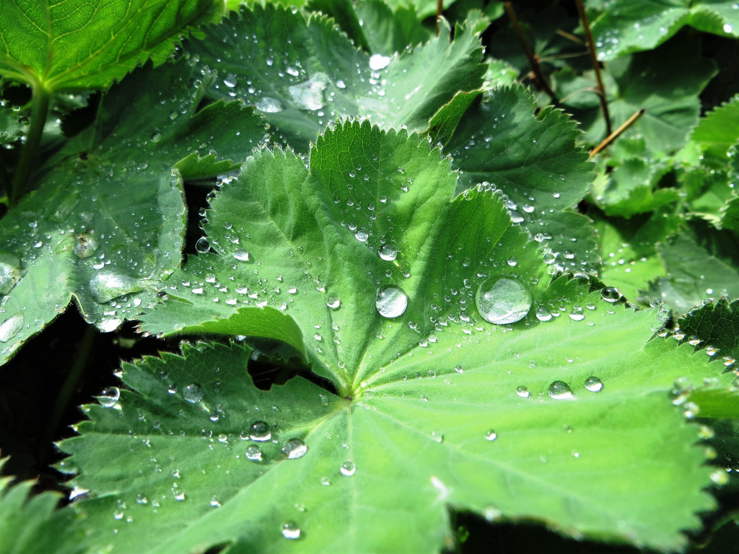 Arzneipflanzen – Wirkstoffe aus der Natur