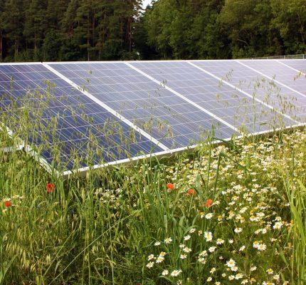 C.A.R.M.E.N.-WebKonferenz informiert über Photovoltaik-Freiflächenanlagen