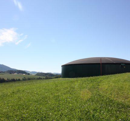 Getreide-Ganzpflanzensilage (GPS)