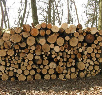 Haben wir genug Holz? – Energieholzmarktbericht 2018 zeigt Potentiale auf