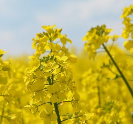 Förderpreise Nachwachsende Rohstoffe – Bewerbung noch bis 30. April einreichen
