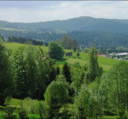 """29. C.A.R.M.E.N.-Symposium: WebKonferenz """"Wald- und Holznutzung im Fokus der Politik"""""""