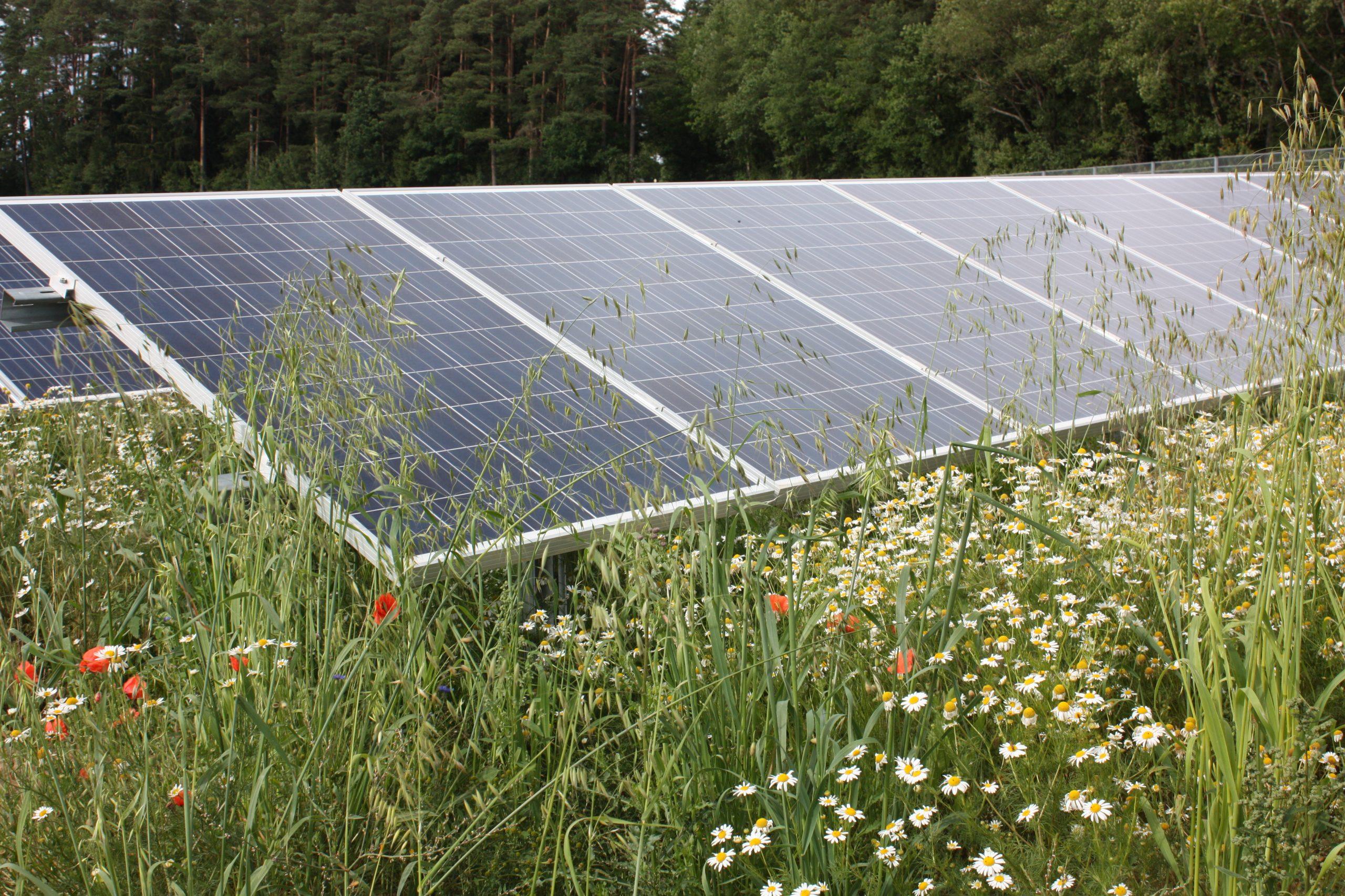 Positionspapier zu Freiflächen- und Agri-PV
