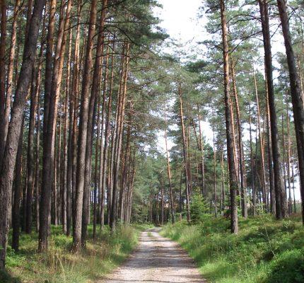 Internationaler Welttag des Waldes am 21. März 2021