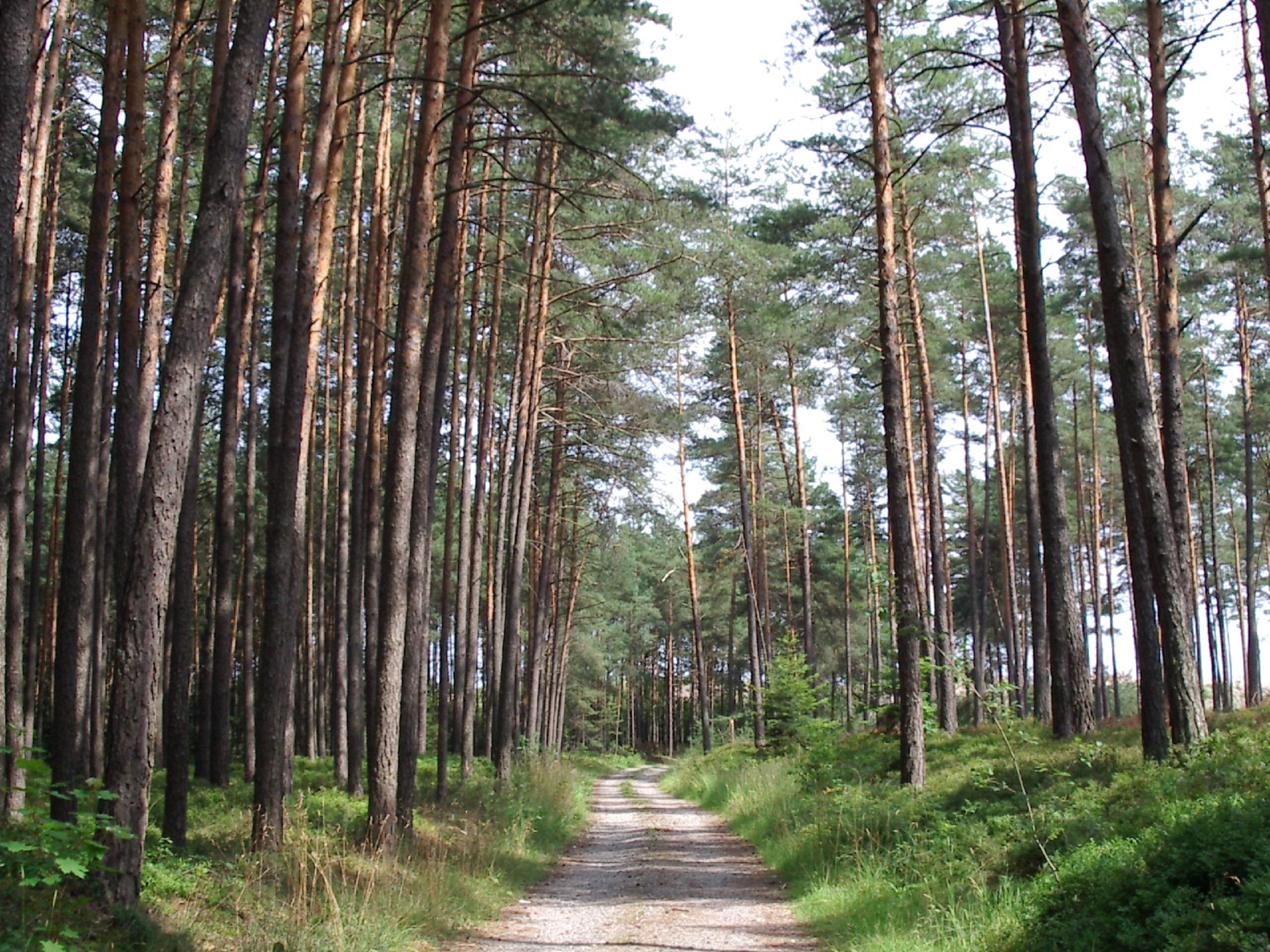 Heimisches Holz als Hochleistungswerkstoff