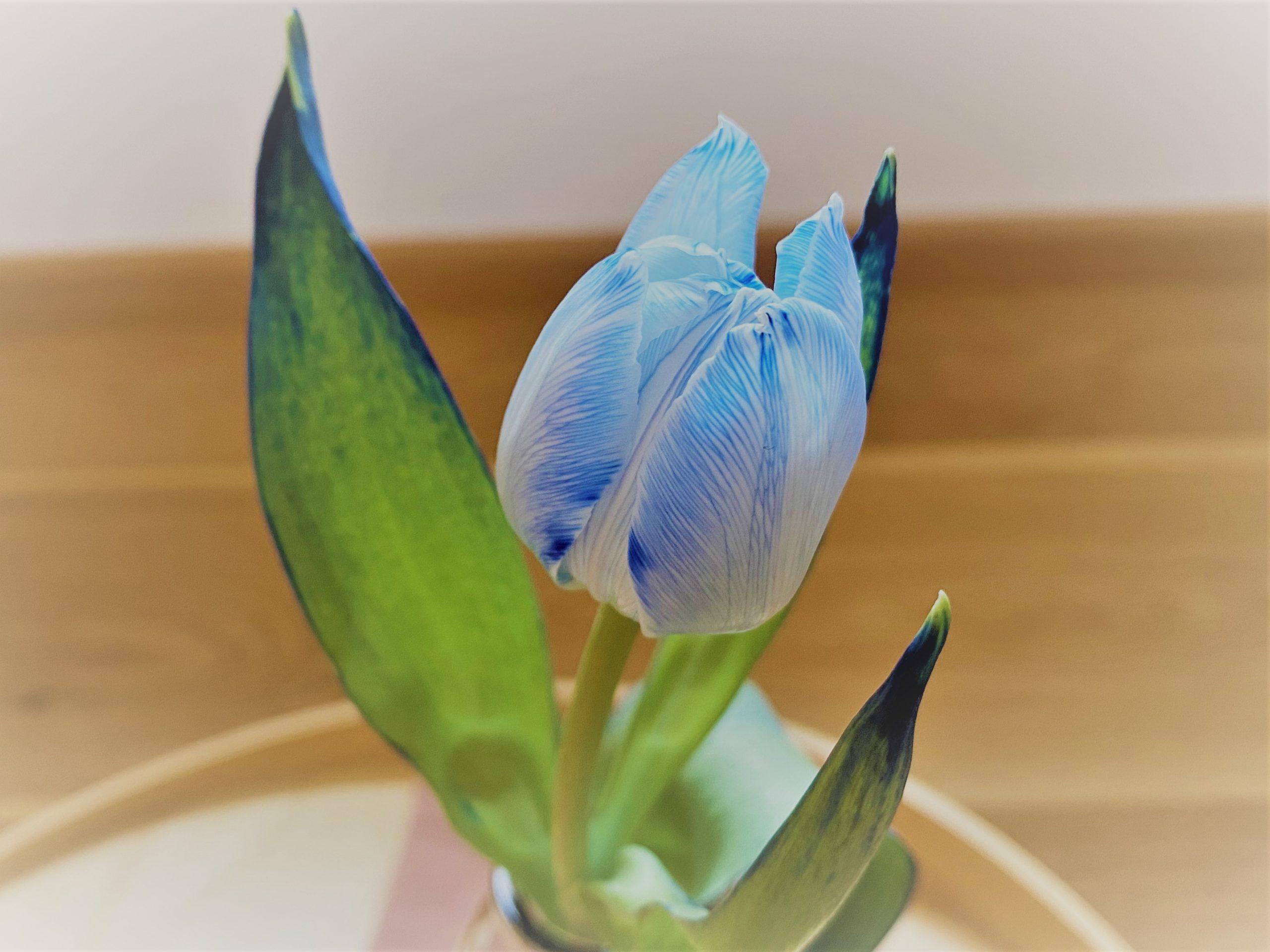 """C.A.R.M.E.N. Kinderwoche: DIY """"Blumen färben"""""""