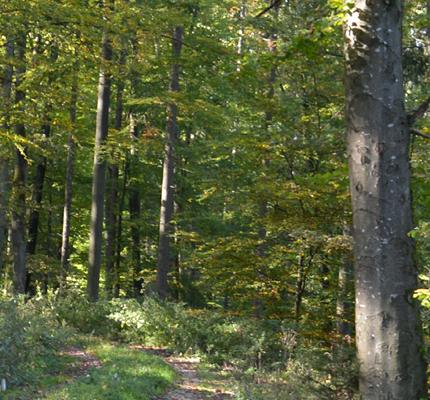 Energieholznutzung in Deutschland – eine Chance für den Klimaschutz
