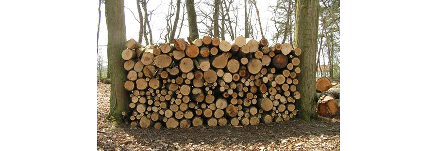 """C.A.R.M.E.N.-WebSeminar """"Heizungsmodernisierung mit Holzpellets und Scheitholz"""" (29.04.2021)"""